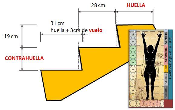 Las escaleras y la ergonometr a urea basados en el for Huella y contrahuella medidas